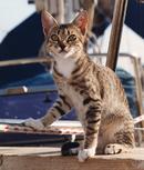 Boat's Cat