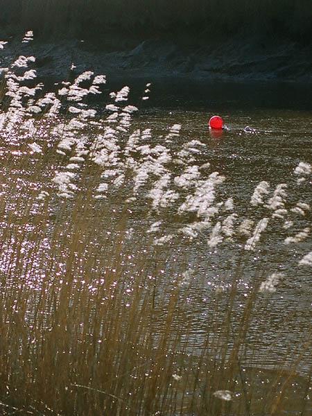 Reeds Calstock