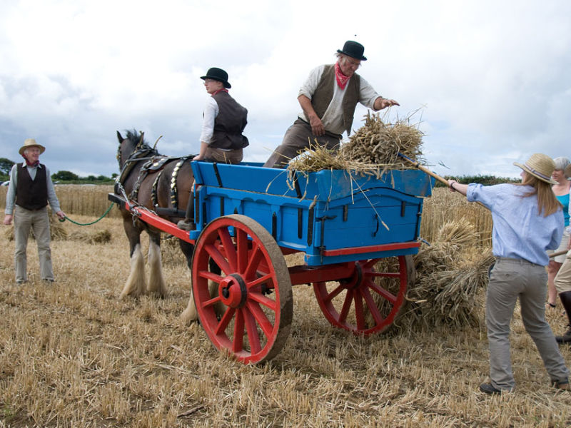 Victorian Harvest 2011