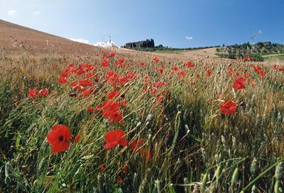 Tuscanny 1