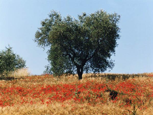 Tuscanny