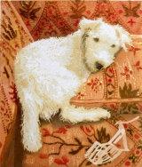 Carol Sutton's Dog