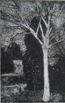 Walled garden tree