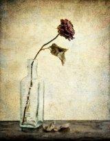 12 Single Rose