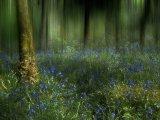 14 Bluebell wood