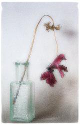 14 Dried Flower 2