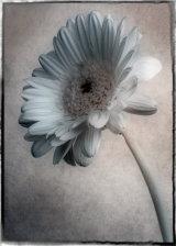 23 Flower 3