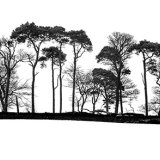 A Line of Trees with Pines
