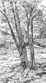 Bridge & trees