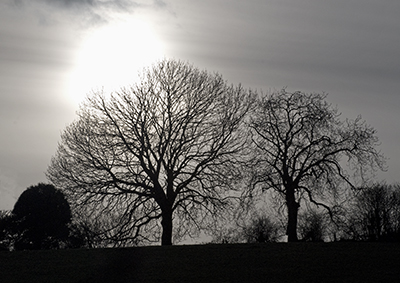Winter trees in Dorset