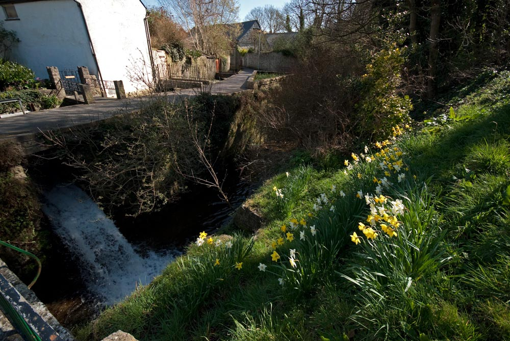 PW9 9631River Lym daffs3