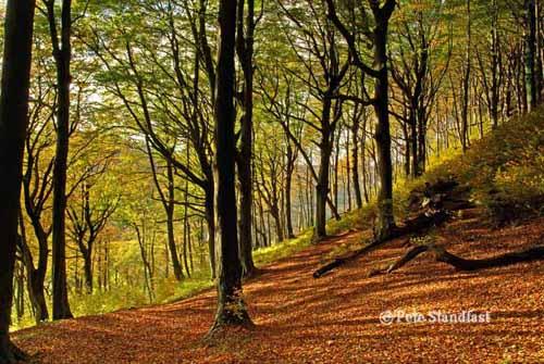 Autumn colours, Tongwynlais, Cardiff