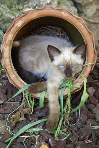 A kitten called Cream - in a pot! Fuengirola, Spain