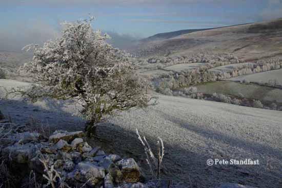 A frosty tree, Brecon Beacons, Powys
