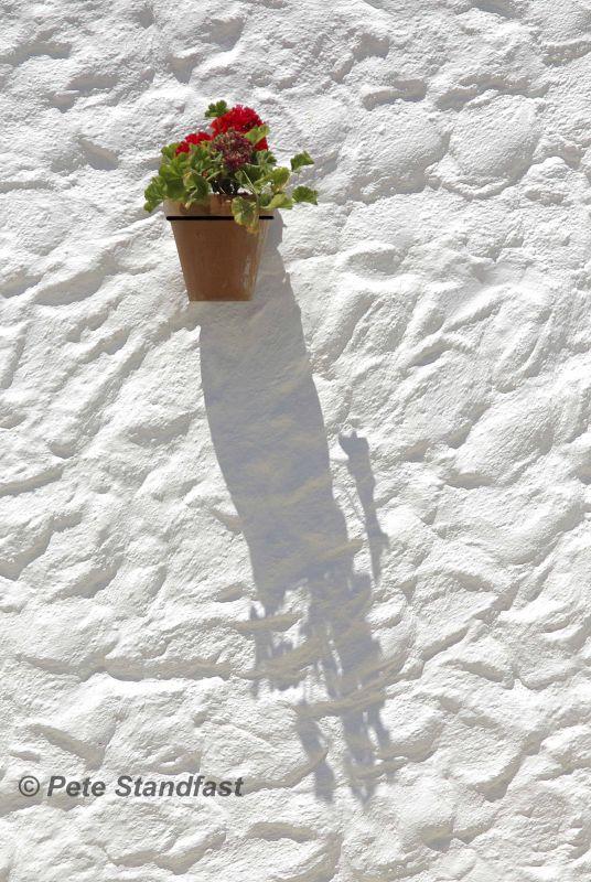 Geranium and shadow
