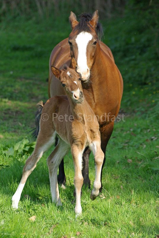 Mum and foal