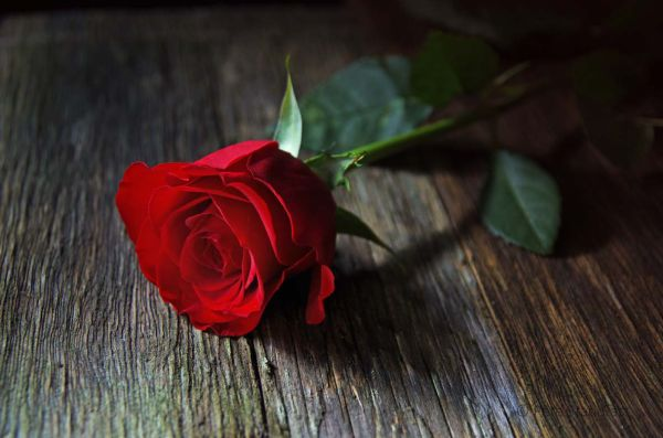 Red rose on a rustic table