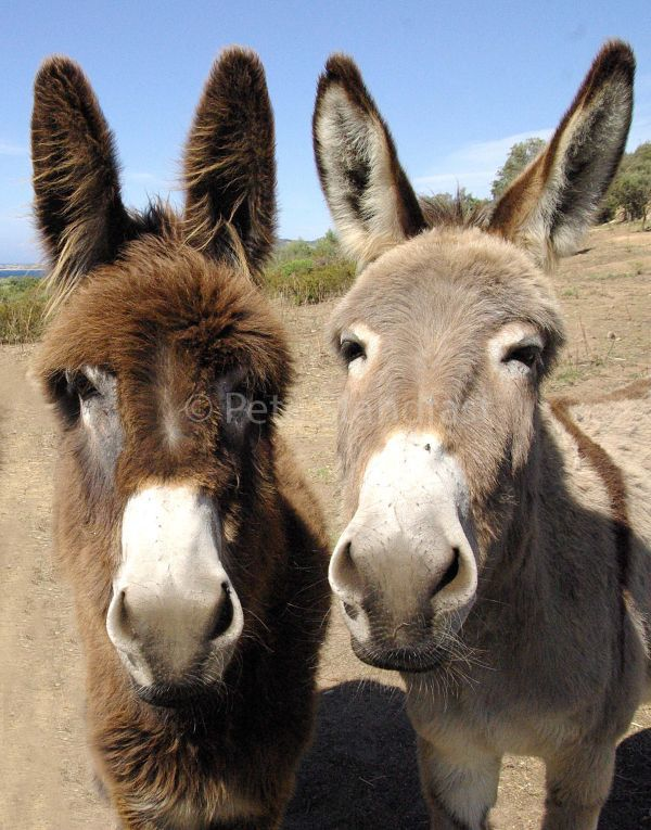 Two donks...