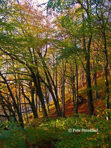 Autumn colours II, Tongwynlais, Cardiff