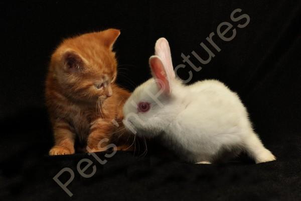 Bunny & Clyde