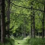 Pheasant Wood