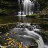 Scaleber Force Autumn