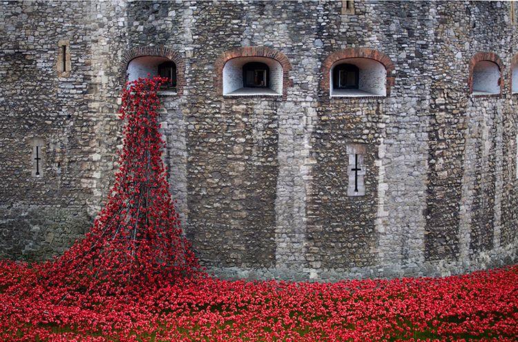 Tower Poppys