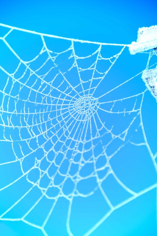 Spiders web colour