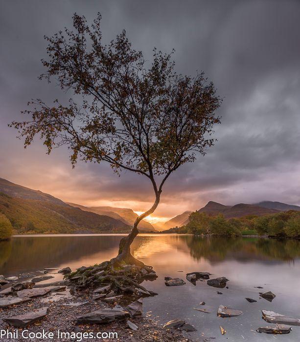 LLyn Padarn Tree