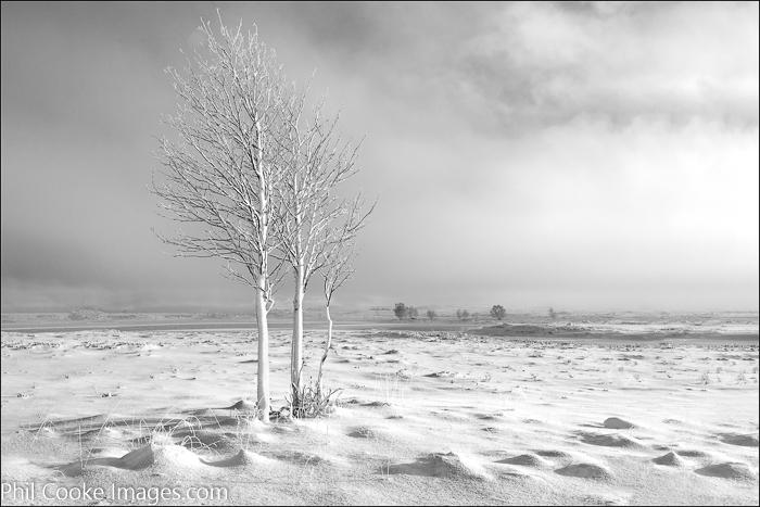 Misty Moorland