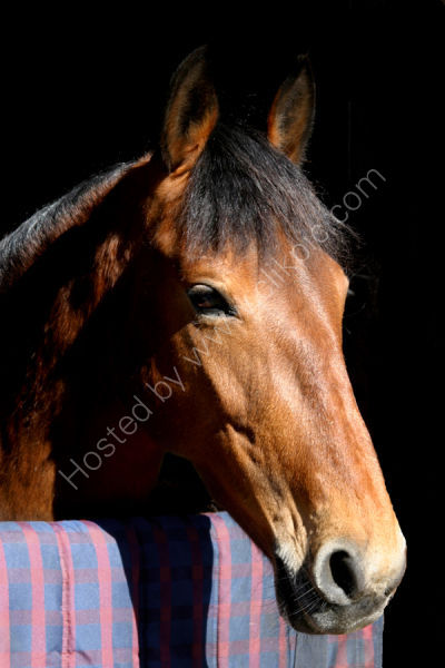 Equine Photography in Sheffield