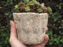 Hypertufa plant pot, planter, Jelly Mould Small.