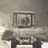 Tractor carrying reeds