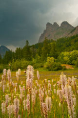 Wild flowers & storm clouds over the mountains