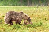 Mother bear & cub
