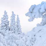 Snow Laden trees, Ruka
