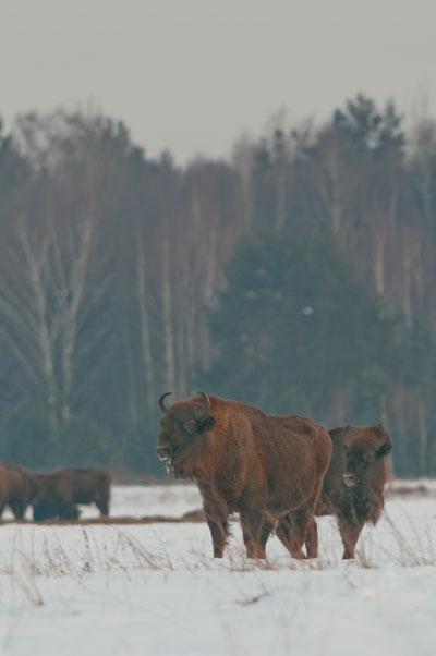 Poland, in Winter