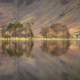 Buttermere Pines Panorama I