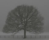 Commended: Tree In Snow And Fog