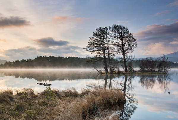 2nd Place: Dawn at Loch Mallachie