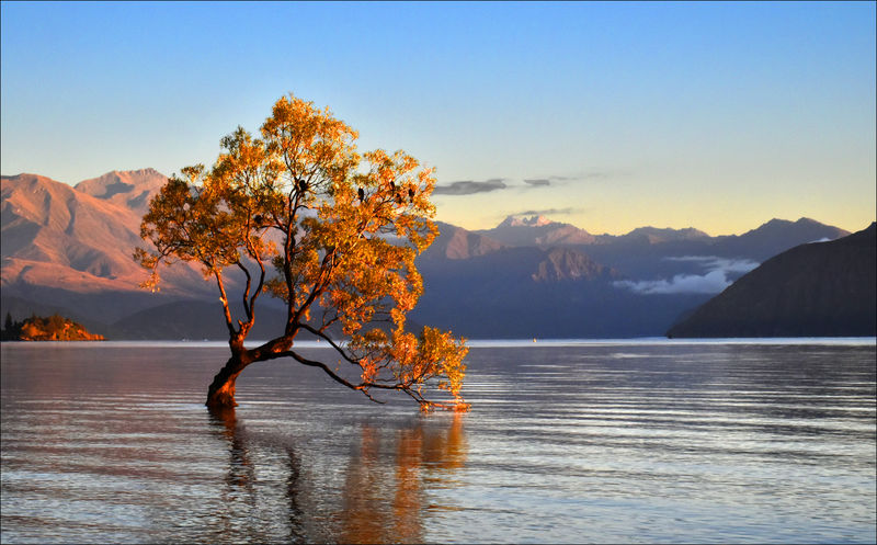 Commended: That Wanaka Tree