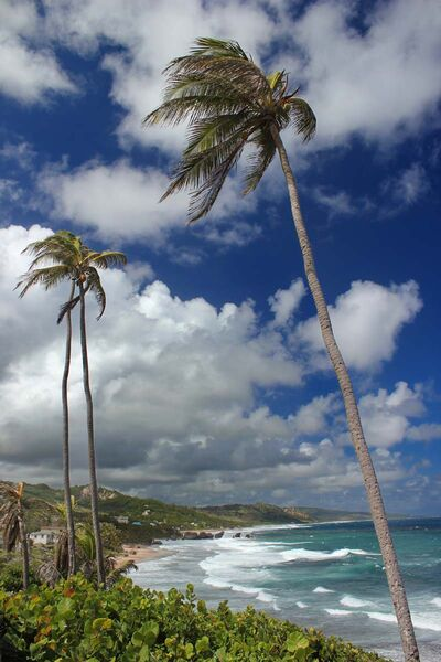Commended: Coastal View Barbados