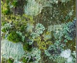 Joint 3rd Place: Lichen on Tree Trunk