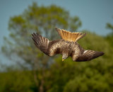 1st Place: Red Kite