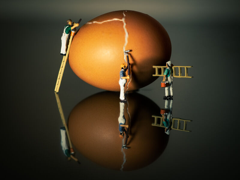 Highly Commended: Egg Repairs
