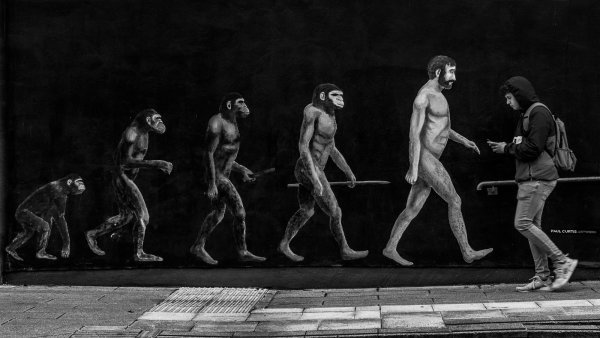Highly Commended - Evolution of Man Going the Wrong Way?