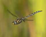 Highly Commended: Migrant Hawker