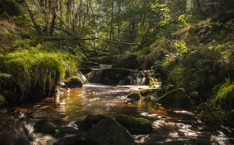 Highly Commended: Royd Edge Stream