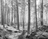 Highly Commended - The Cold Misty Wood
