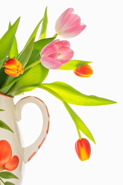 Highly Commended - The Jug and Tulips